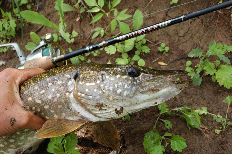 рыбалка на большом иргизе