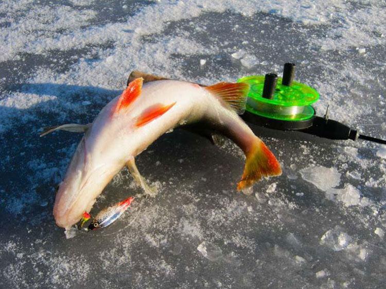 рыбалка на лекшма озеро
