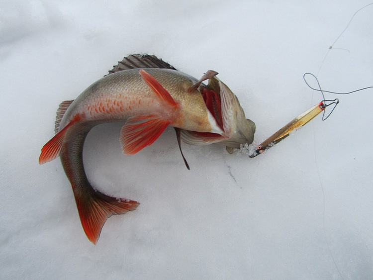 рыбалка на окуня на блесну