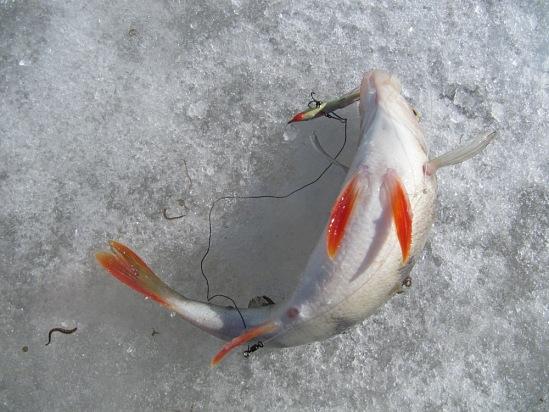 рыбалка на балансир на севере