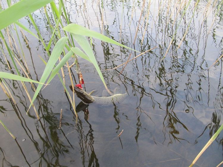 летняя рыбалка на цимлянском водохранилище