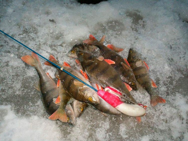 рыболов на ладоге