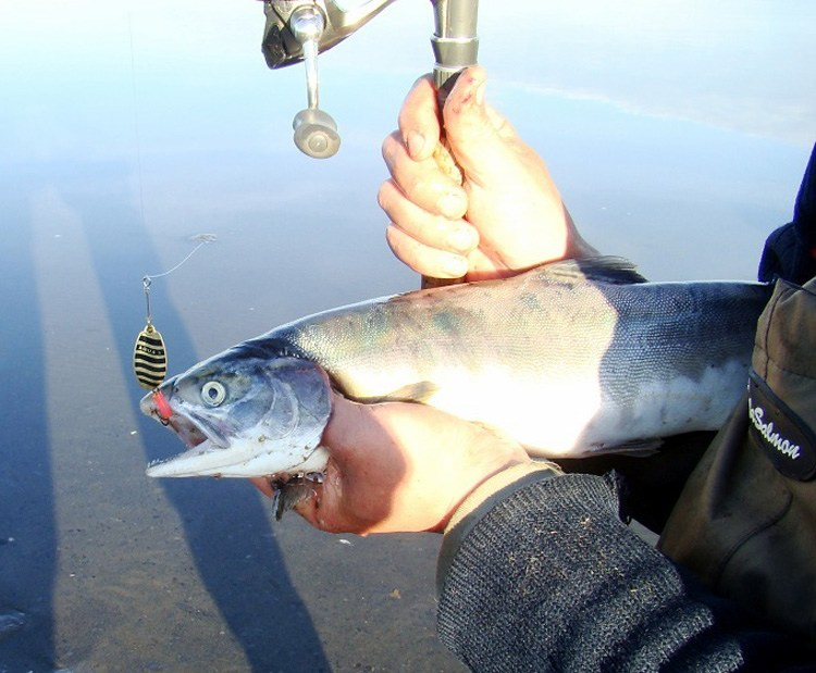 аква рыболовный петербург