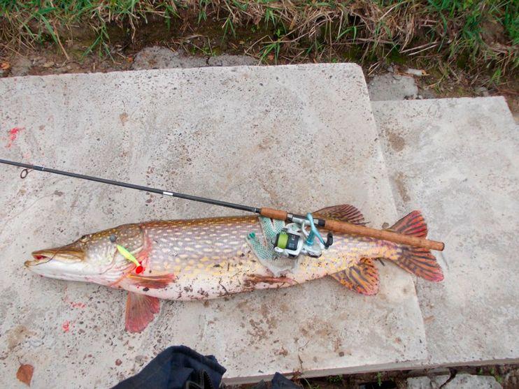ловля сома в апреле на реке