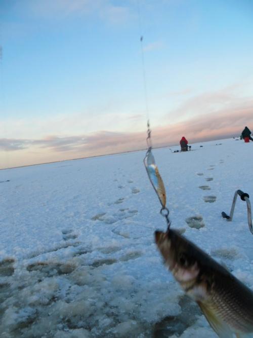 Рыбалка на севере форум 2019 яндова губа